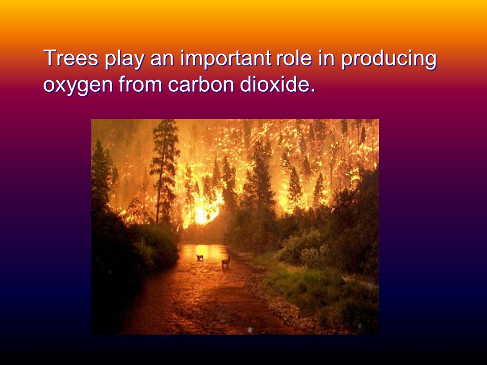 Trees play an important role in producing oxygen from carbon dioxide.