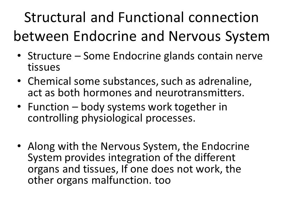 The Endocrine System. - ppt video online download