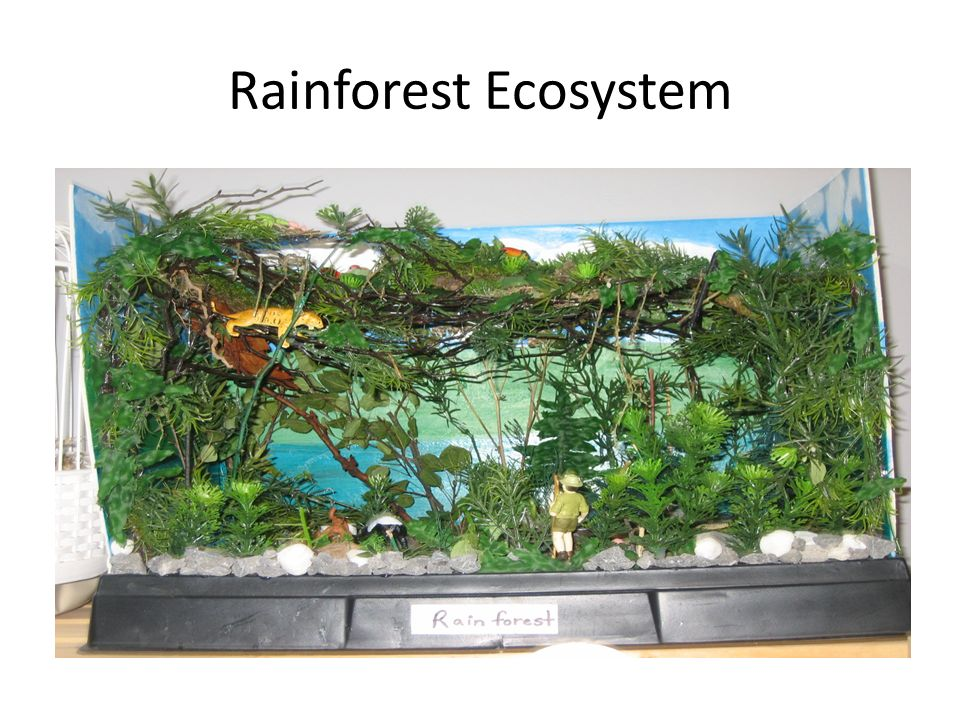 Ecosystem Diorama Project - ppt video online download