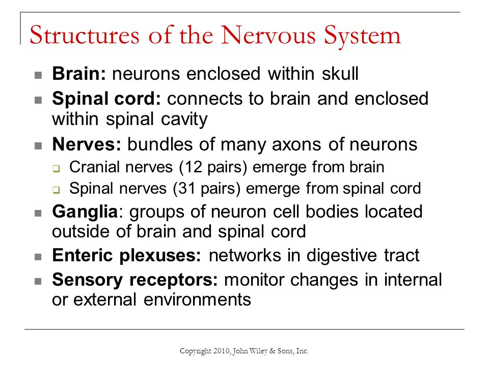 Chapter 9 Nervous Tissue - ppt download