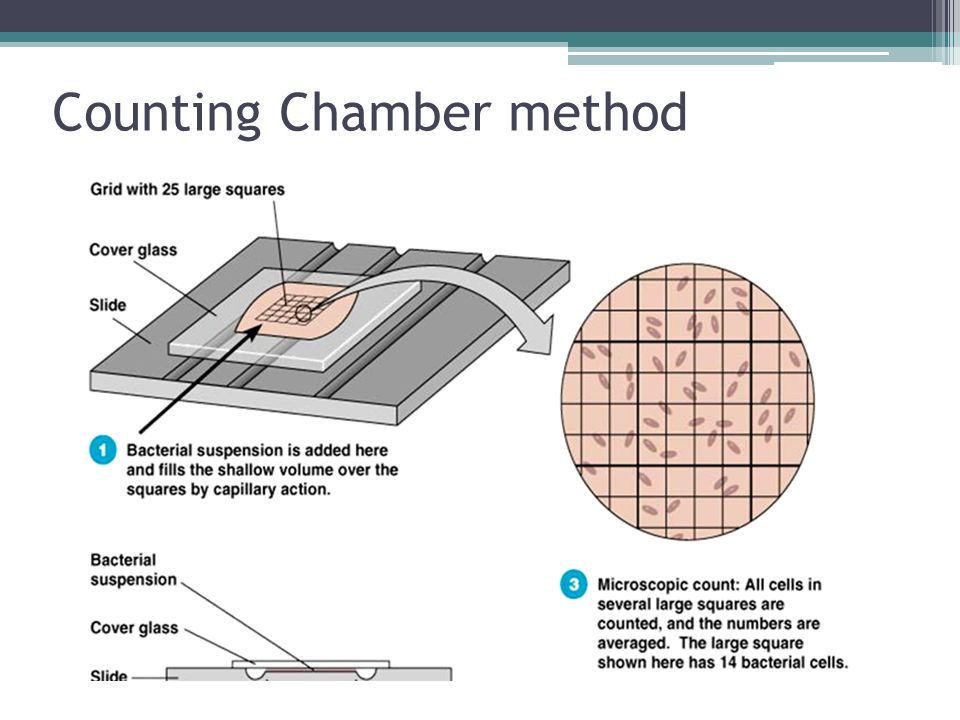 Counting Chamber method