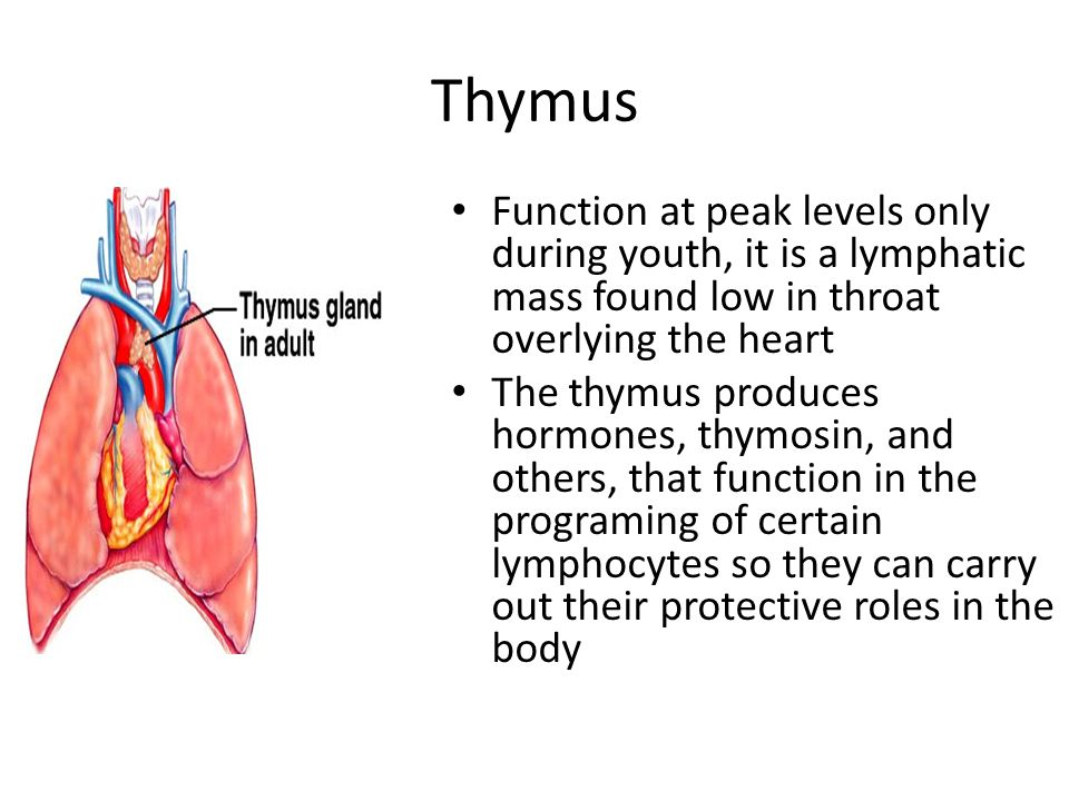 Thymus Function at peak levels only during youth, it is a lymphatic mass found low in throat overlying the heart.