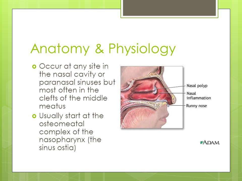 Contemporáneo Anatomy And Physiology Of Nose Bandera - Anatomía de ...