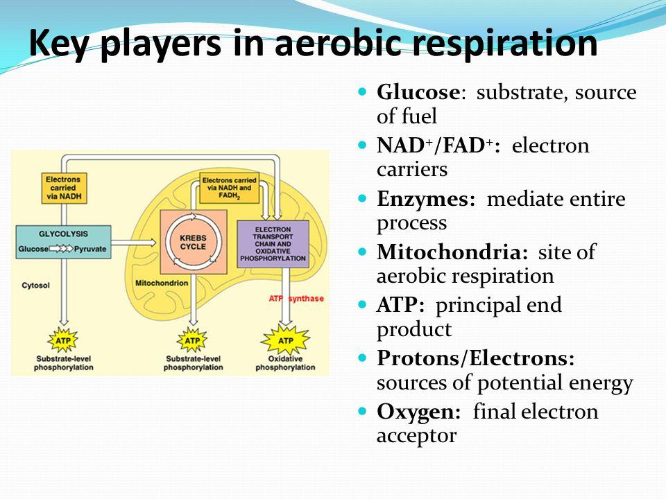 cellular respiration pp 69 � 73 amp ppt video online download