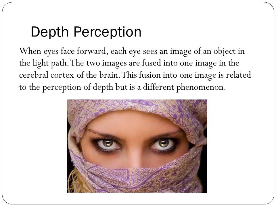 binocular depth perception and the cerebral cortex pdf