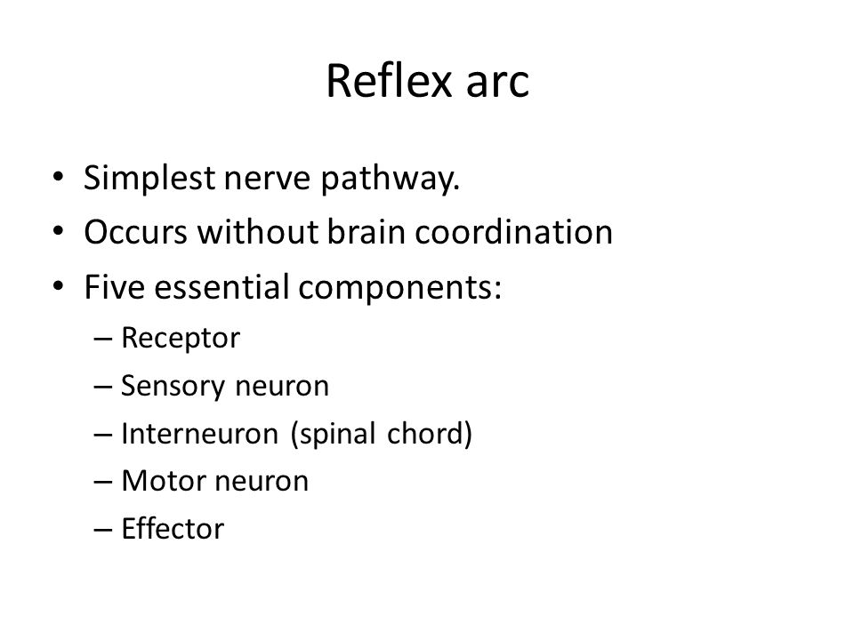 Reflex arc Simplest nerve pathway. Occurs without brain coordination