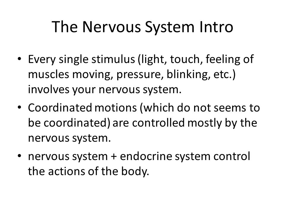 The Nervous System Intro