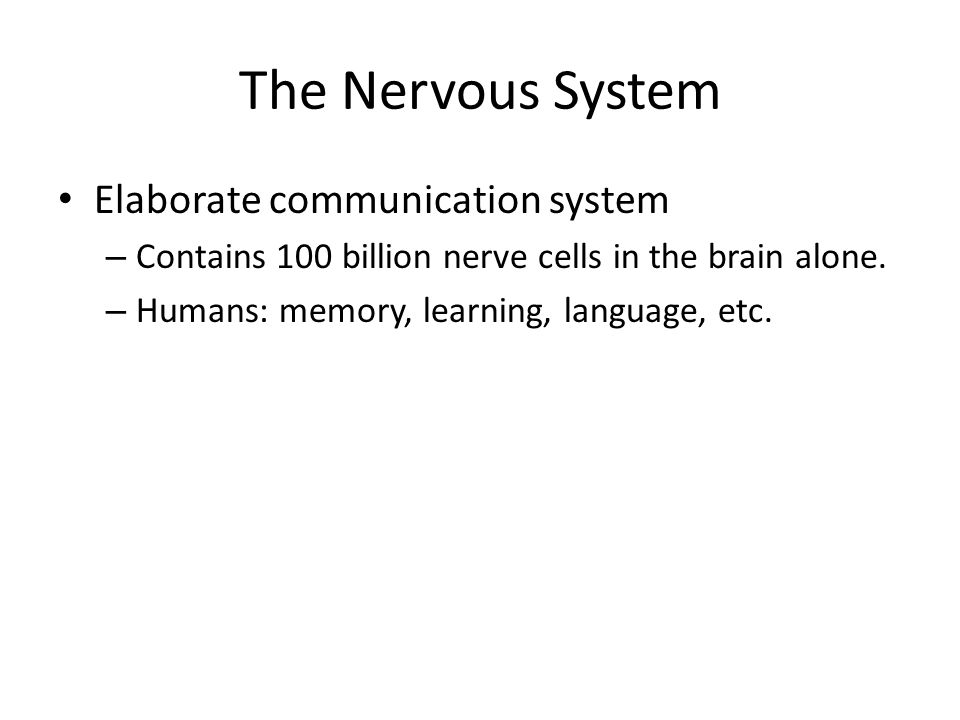 The Nervous System Elaborate communication system