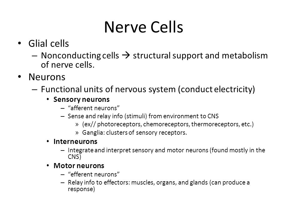 Nerve Cells Glial cells Neurons