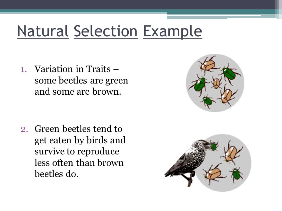 Natural Selection Example