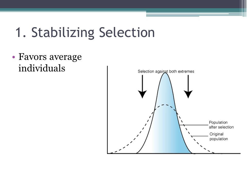 1. Stabilizing Selection
