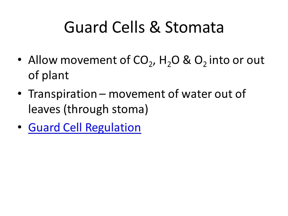 Guard Cells & Stomata Allow movement of CO2, H2O & O2 into or out of plant. Transpiration – movement of water out of leaves (through stoma)