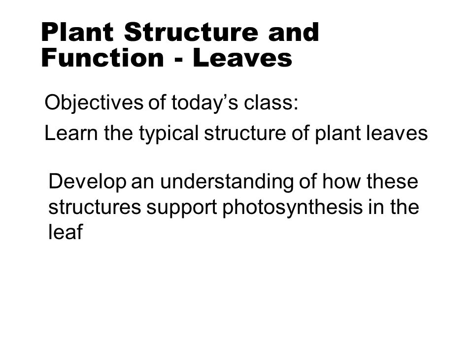 Plant Structure and Function - Leaves