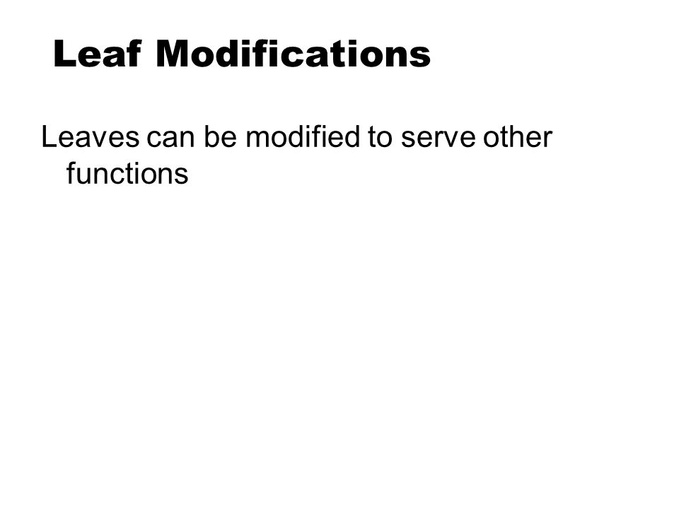 Leaf Modifications Leaves can be modified to serve other functions