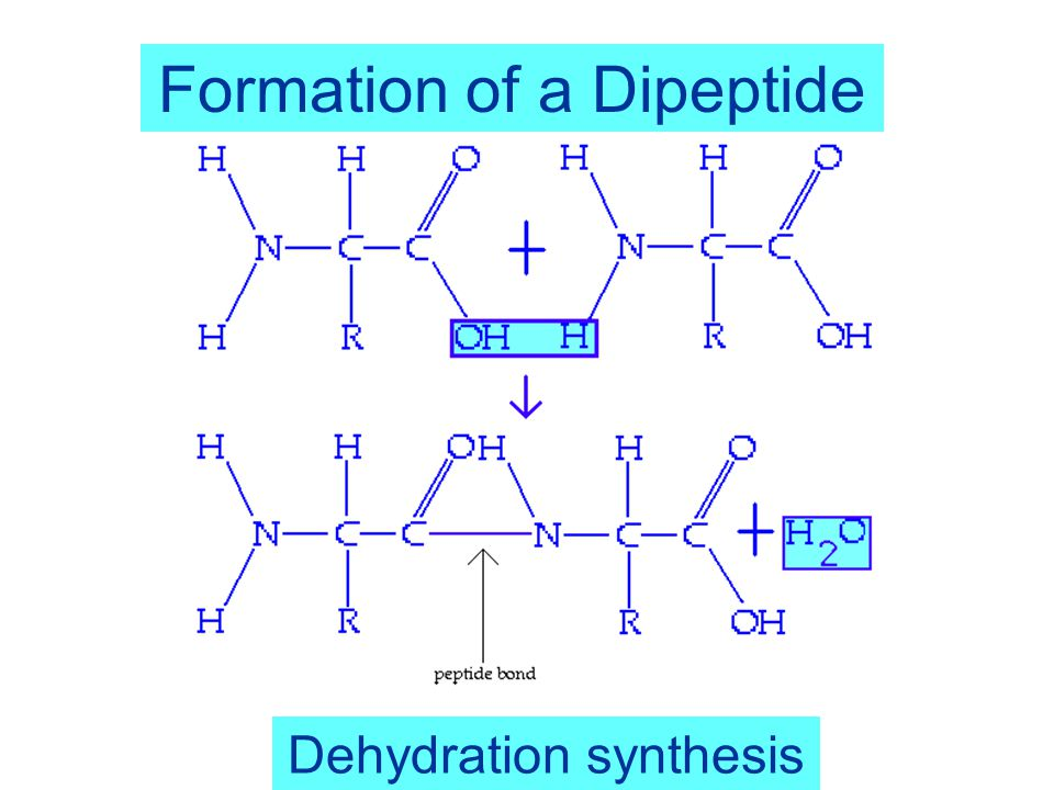 2 Peptide bond formation Two amino acids can undergo a condensation reaction where the carboxyl group reacts with the amine group The formation of this peptide bond see box in figure produces a dipeptide and a H 2 O molecule exhibiting a dipole moment m  37 Debye for the peptide bond arrow in figure Note that the dipole moment of the dipeptide is different from the peptide bond