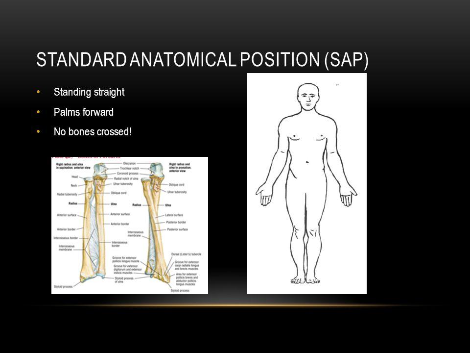 Human Anatomy Terminology Ppt Video Online Download