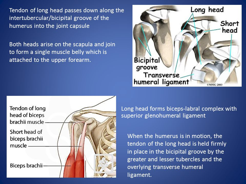 MRI Anatomy of the Shoulder - ppt video online download
