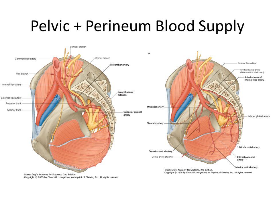 Pelvis Forum. - ppt video online download