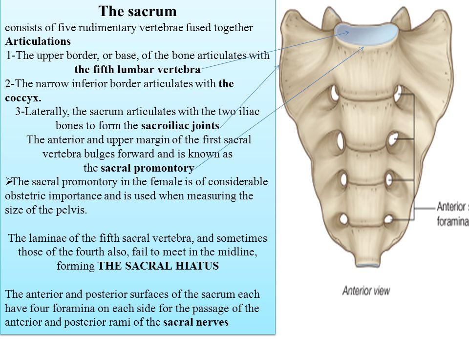 The Vertebral Column 7 Cervical Is Composed Of 33 Vertebrae Ppt