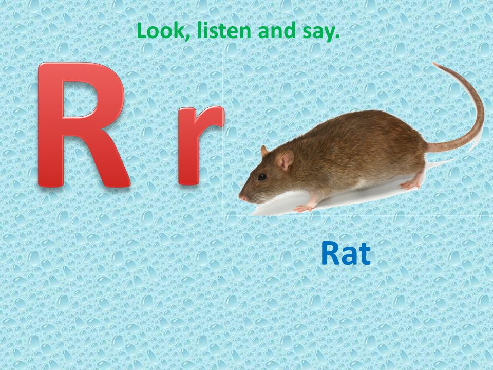 R Look, listen and say. r Rat