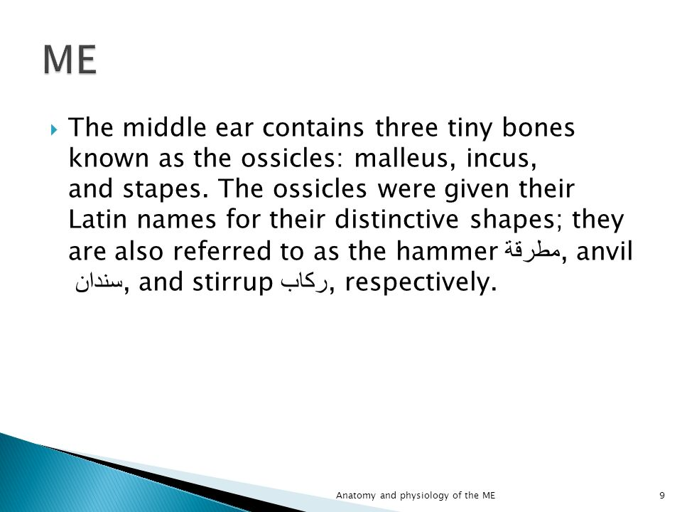 Perfect Anatomy Of Middle Ear Ppt Ornament - Human Anatomy Images ...