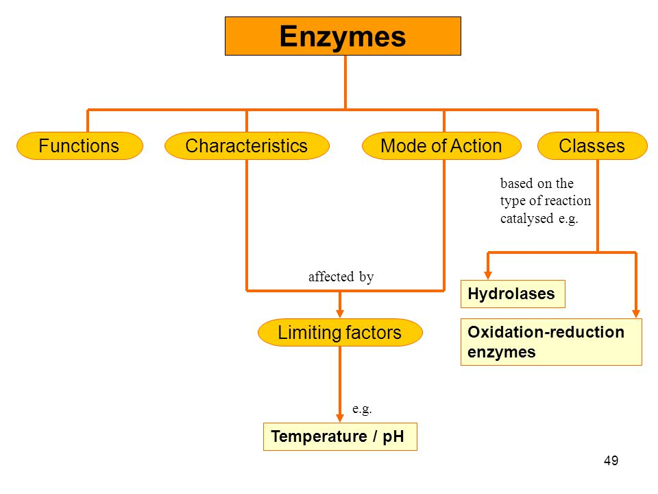 Chapter 5   Enzymes What Are Enzymes? Classification of Enzymes