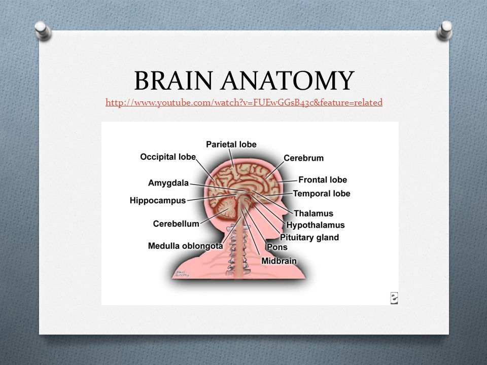Increased Intracranial Pressure Youtube Comwatch Ppt Video