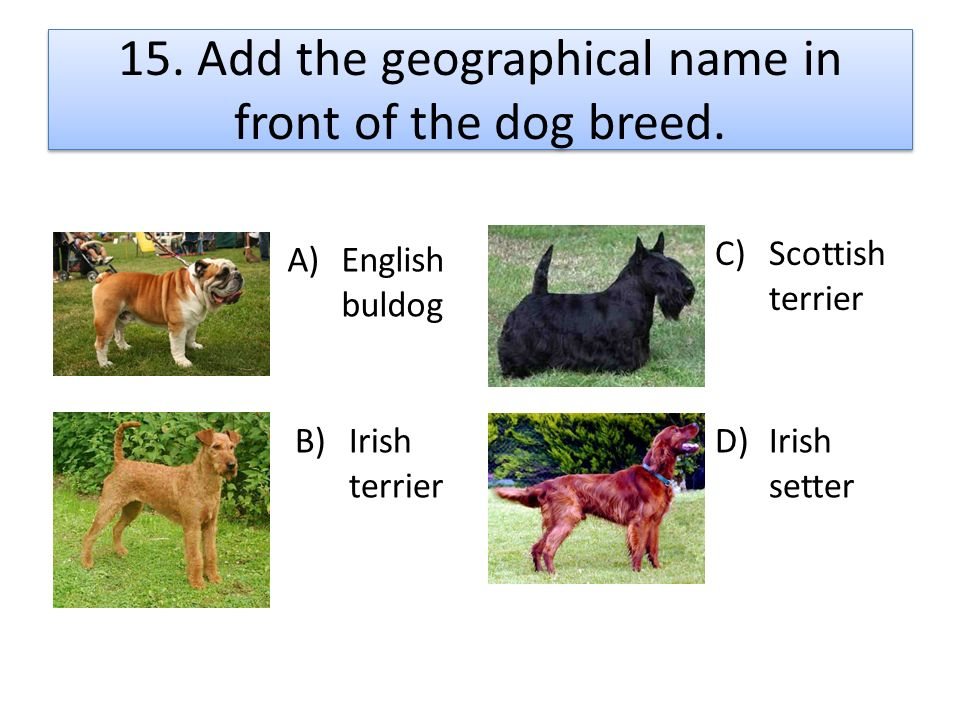 15. Add the geographical name in front of the dog breed.