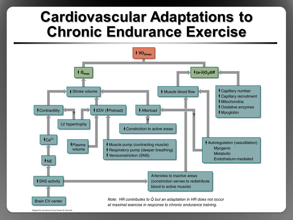 Image result for adaptations to endurance training