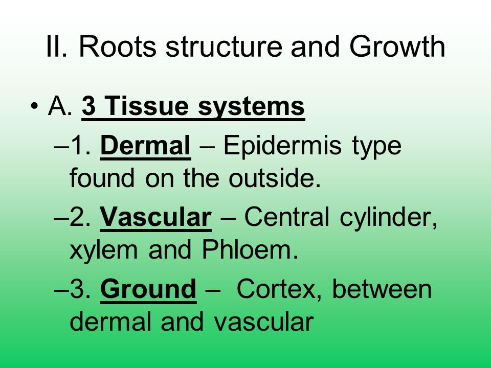 II. Roots structure and Growth