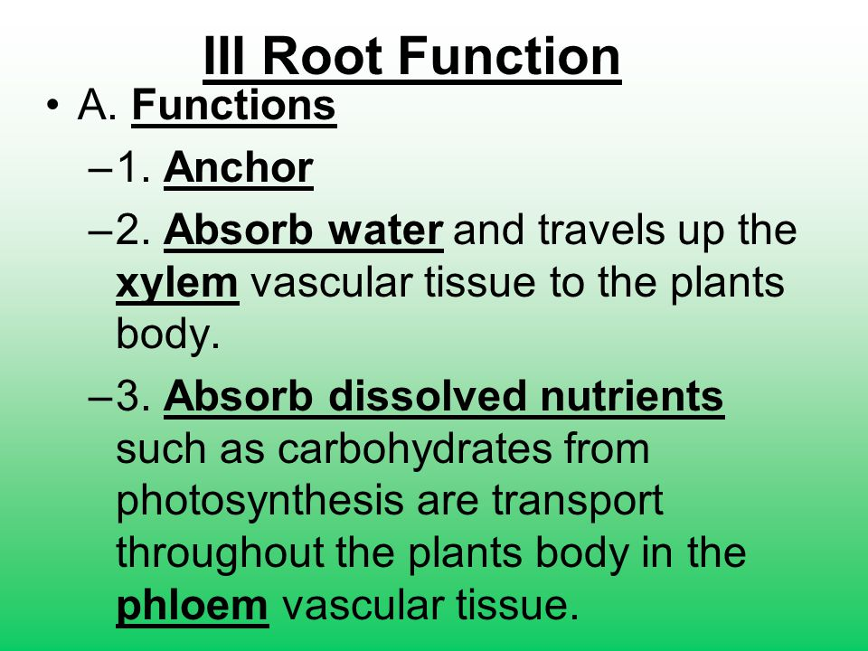 III Root Function A. Functions 1. Anchor