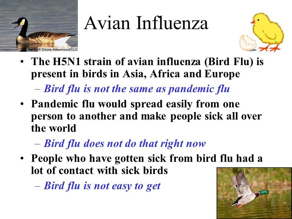 Avian flu lipid or naked