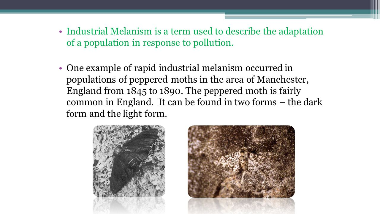 Peppered Moth The Galapagos Islands Ppt Video Online Download