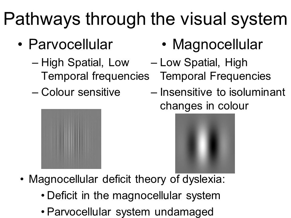 Pathways through the visual system