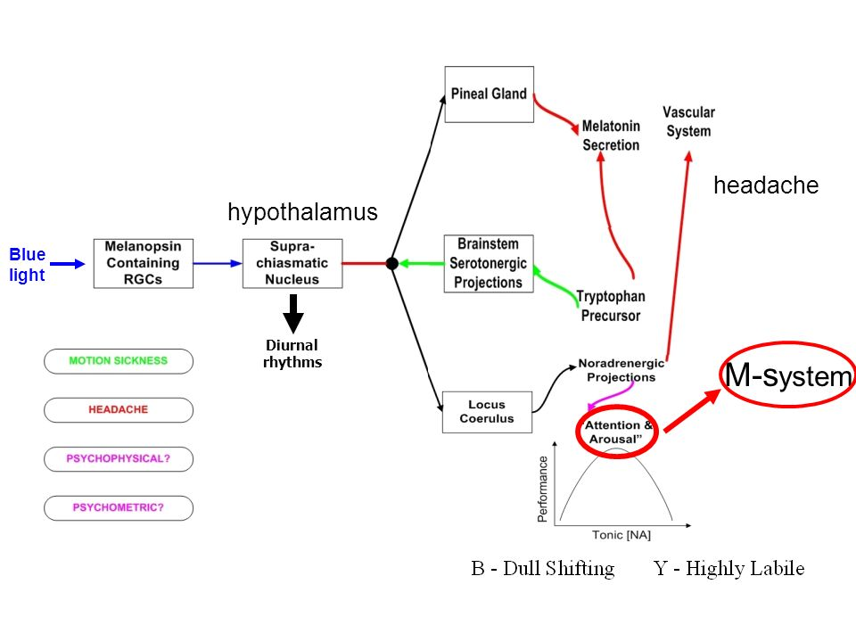 headache hypothalamus Blue light Diurnal rhythms M-system