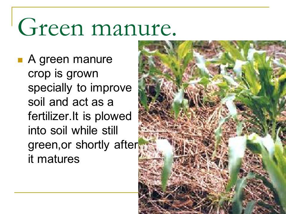 24 Green Manure