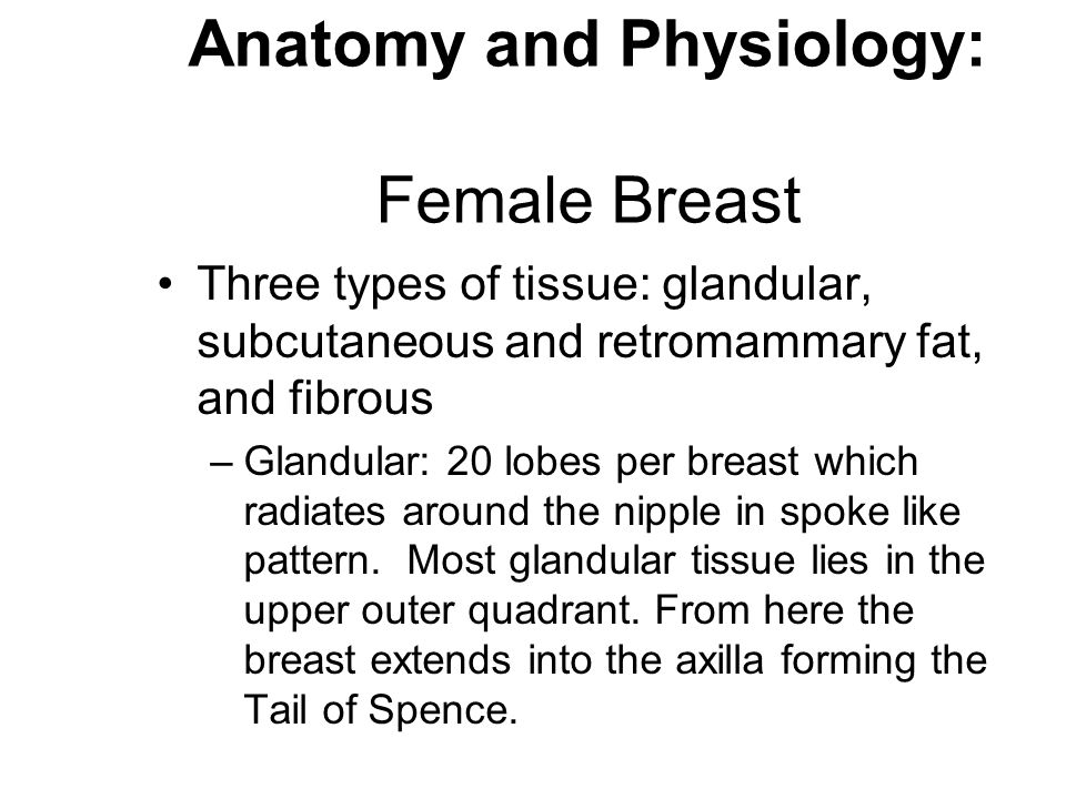 Dorable Anatomy And Physiology Of The Female Breast Ilustración ...
