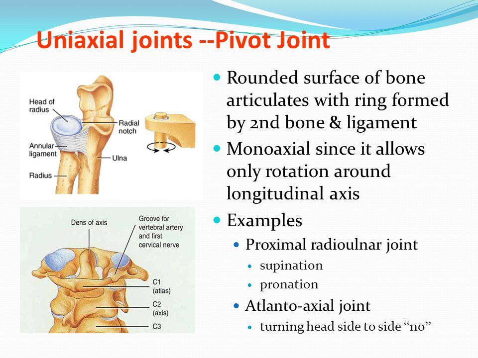 Arthrology Joints Of Bones Of Trunk Ppt Video Online Download
