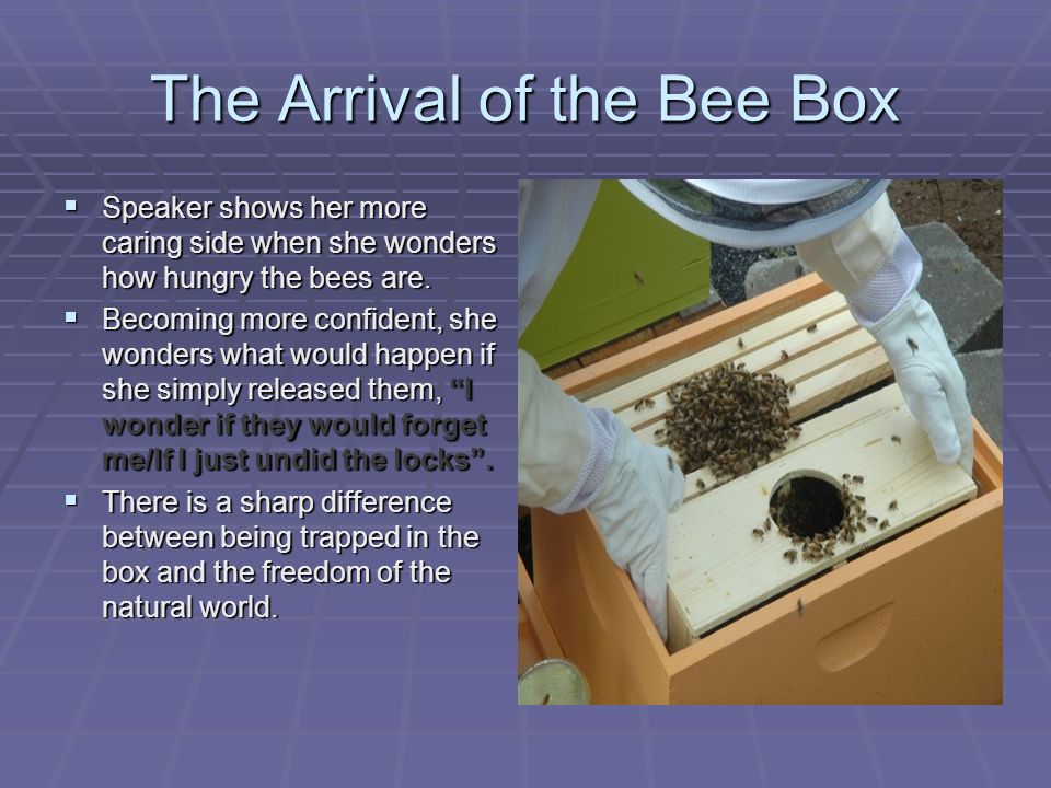 sylvia plath the arrival of the bee box essay