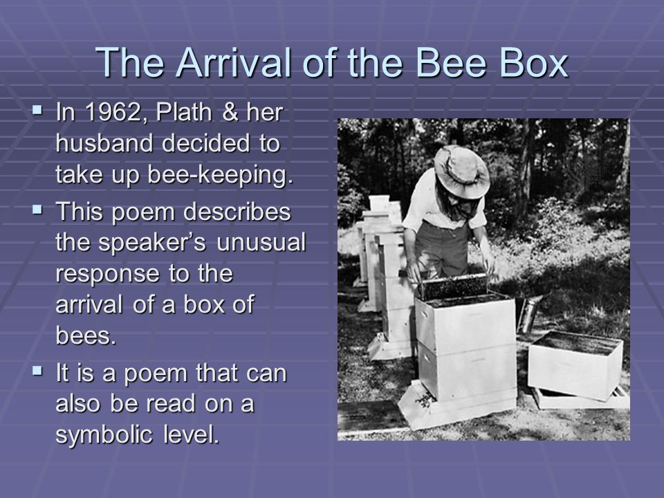 a comprehensive analysis of the poem the arrival of the bee box The story of the poem deals with a bee box in the first stanza she states that it looks like 'square', like a 'midget's coffin' it isheavy and noisy: 'such a din in the second stanza, the bee box both frightens and attracts plath she stares in at the bees through a little wire grid the box is 'locked' because its.