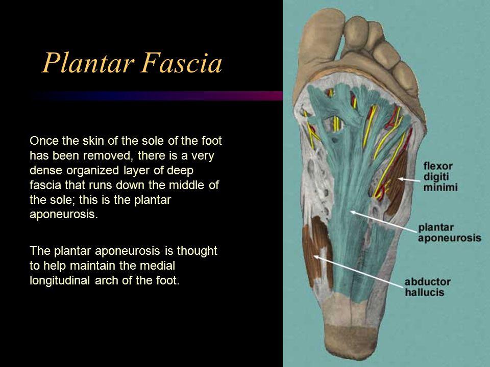 Foot Anatomy. - ppt video online download