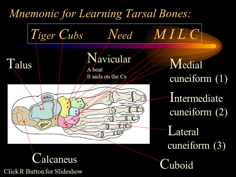 Foot Anatomy. - ppt video online download