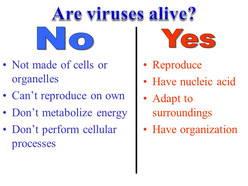 Are viruses alive No Yes Not made of cells or organelles
