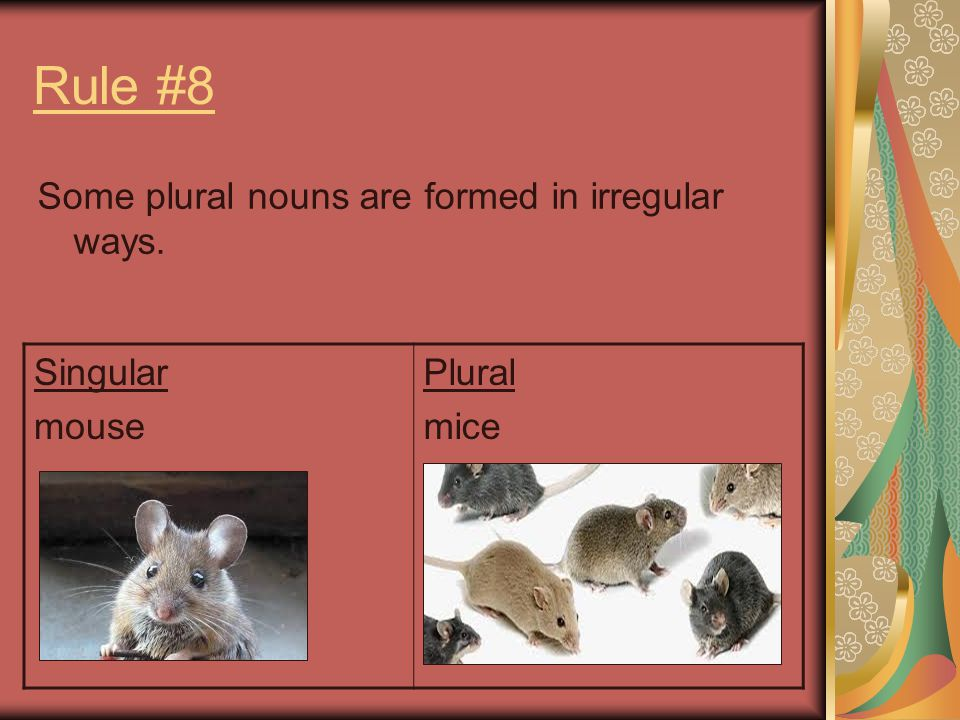 Rule #8 Some plural nouns are formed in irregular ways. Singular mouse