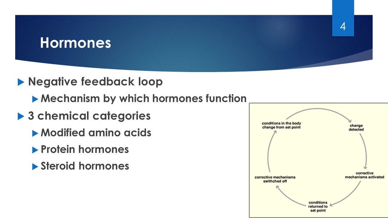 Homeostasis Aldosterone Thymus Gland Hyperglycemia Ppt Video. 4 Hormones Negative Feedback. Wiring. Aldosterone Hormone Feedback Loop Homeostasis Diagram For At Scoala.co