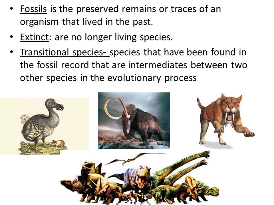 Fossils is the preserved remains or traces of an organism that lived in the past.