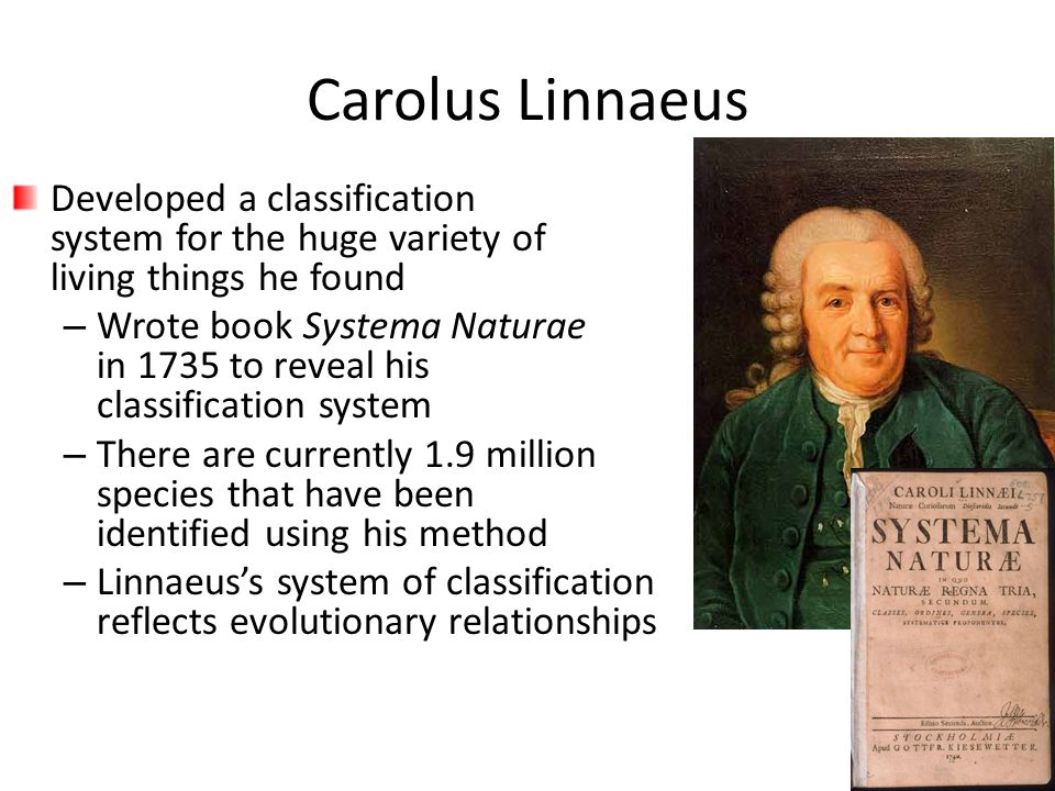 Carolus Linnaeus Developed a classification system for the huge variety of living things he found.