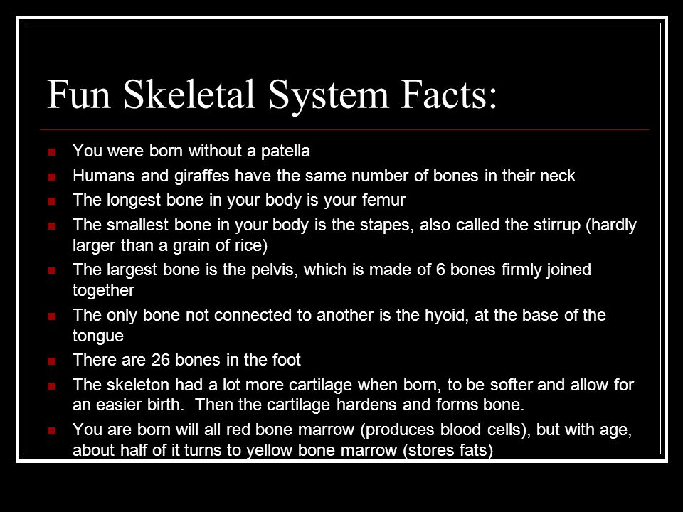 The Skeletal System No bones about it!. - ppt video online download