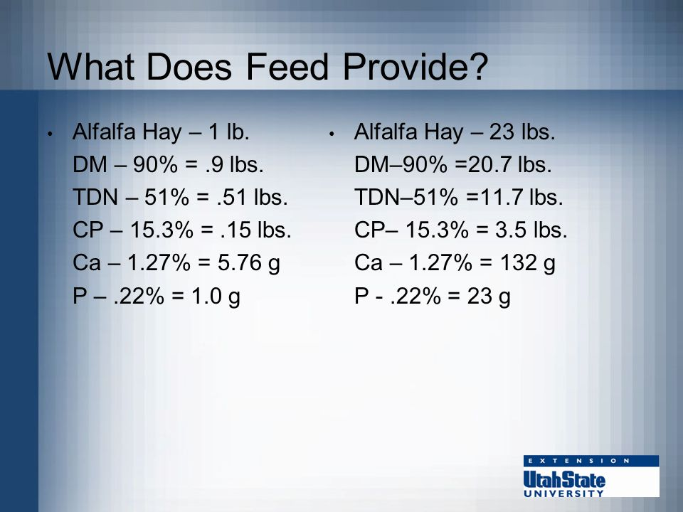 What Does Feed Provide Alfalfa Hay 1 Lb DM 90