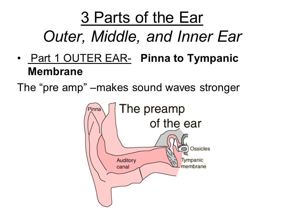 Anatomy and Physiology of the Ear - ppt video online download